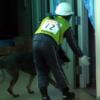 trainner10