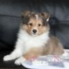 中型犬出産情報